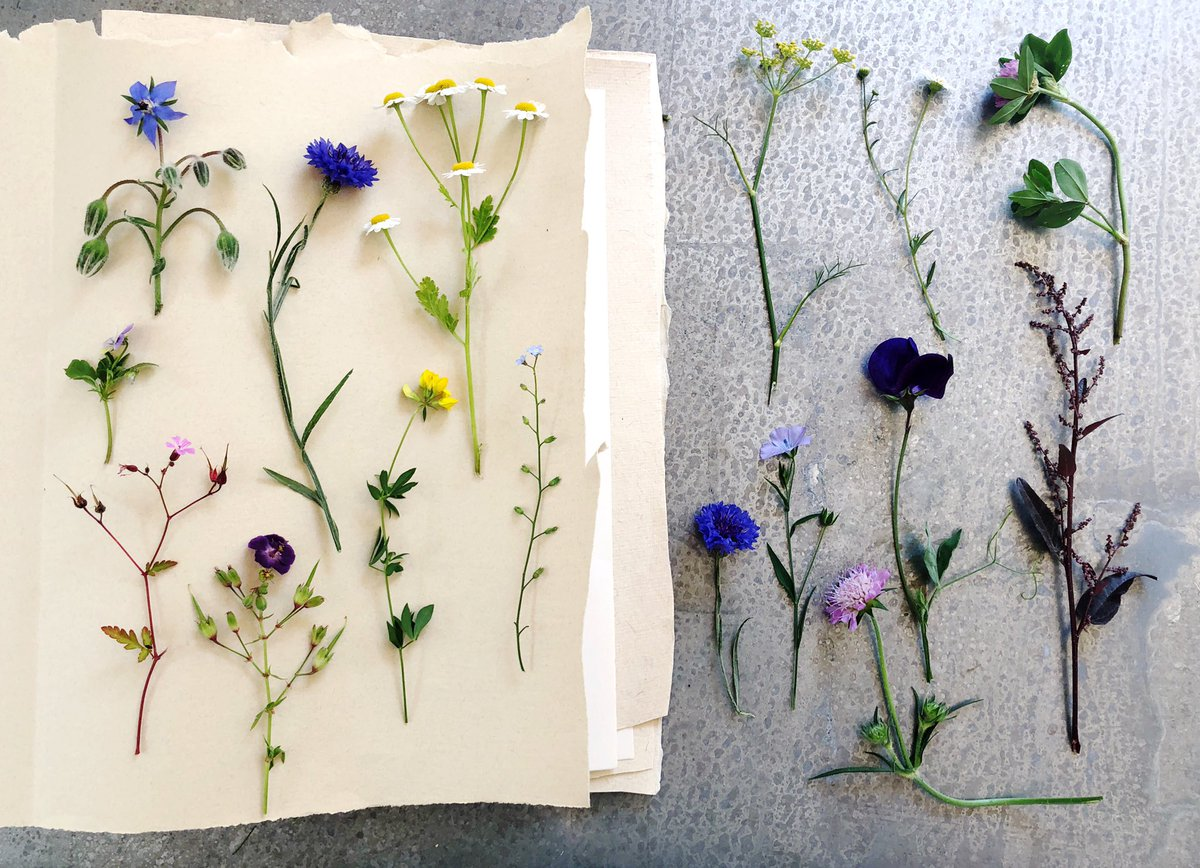 I'm making a herbarium of what's flowering in our garden in July #FlowerReport