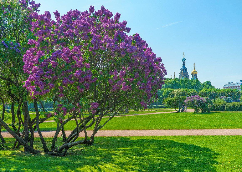 средние красивые деревья в москве фото этого холодильнике