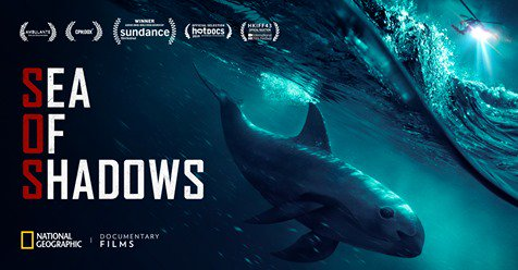 ' #SeaOfShadows  Now In Cinemas All Over The US! ' |  Grab Your Family & Friends And Run To A Theater Near You. ''The Most Exciting Action Movie This Summer May Not Be A Big Hollywood Production, But A Documentary. ~ @CaptPaulWatson ..▼  https:// tinyurl.com/y25hldm9       @SeaShepherdSSCS<br>http://pic.twitter.com/JTJK9iliKE