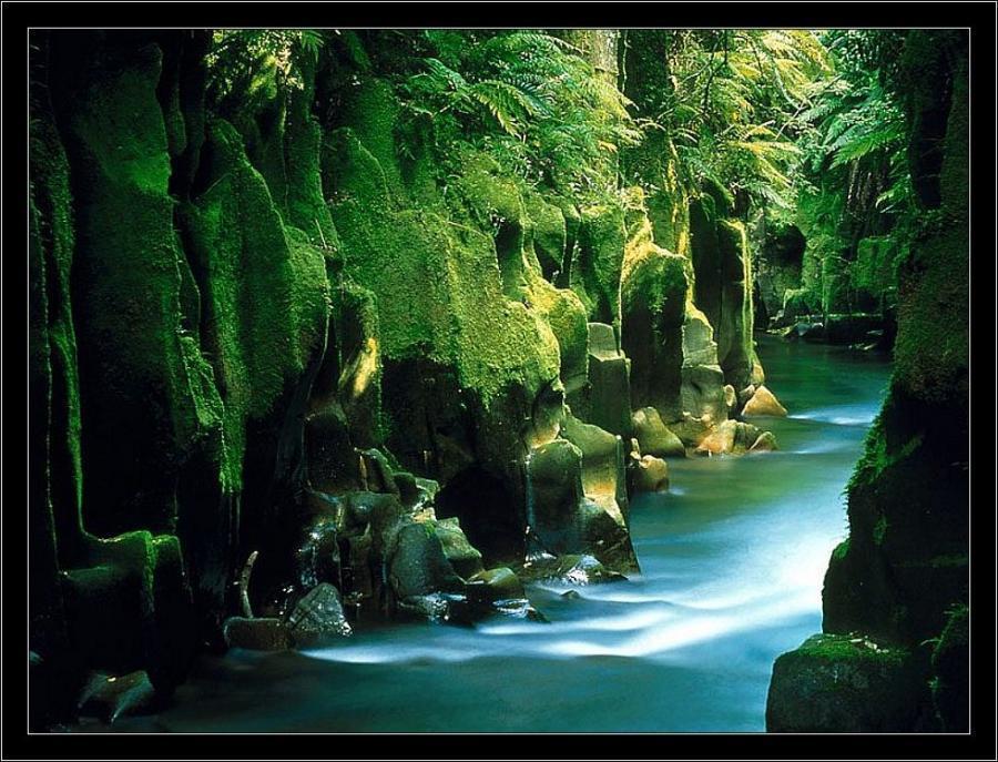 Te Whaiti-Nui-A-Toi Canyon, Whirinaki Forest, North Island, New Zealand <br>http://pic.twitter.com/vYy9B4TGzw