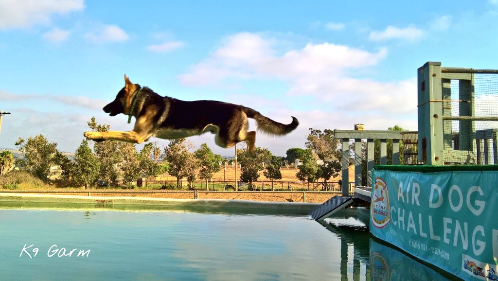 Air #moosedog He loves dock diving. Have not done in awhile but it was a favorite hobby of his  #K9Garm #SARK9 #dogsoftwitter #dog #dogs #germanshepherd #gsd #FaMoose<br>http://pic.twitter.com/RpbIEV96B9