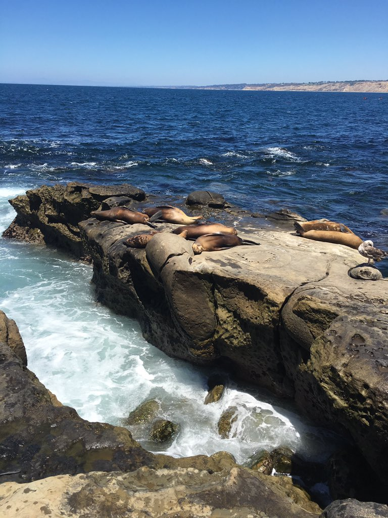 @nathanheller I just took this photo of a bunch of sea lions with Live Photo on by accident. Super awkward for all involved.