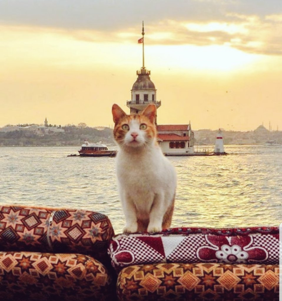 Foreigners:  Me: Look how great is İstanbul!!<br>http://pic.twitter.com/ELJ9t422ar