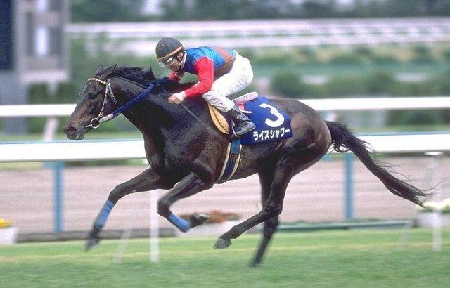 昔競馬にハマっててめちゃ応援してたのは、ライスシャワーとステイゴールド(*´ω`*)今はやめたけど。 ダビスタで遊んで血統とか覚えた。 懐かしい(*´ω`*) 初めて見たのは、オグリキャップの引退の有馬記念。←テレビでな