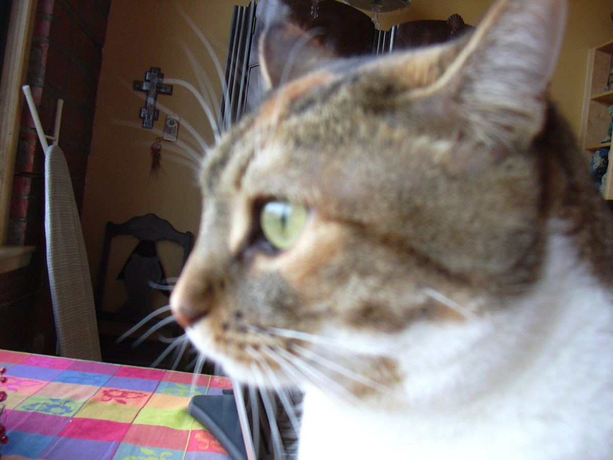 Lady Marmalade: you were part of the family for 15 years, we were honoured to spend your last day with you.  What a first-rate, exceptional cat you were.  <br>http://pic.twitter.com/v2BbsmBEJ0