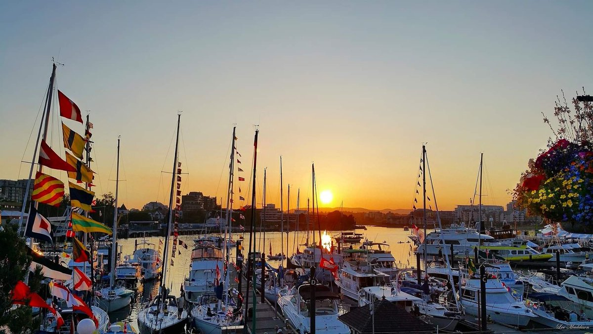 Harbour Sunset ⛵🌅 Victoria, BC #yyj #sunsets #victoriabc #vancouverisland #sunset #sailboats #explorebc 🍁