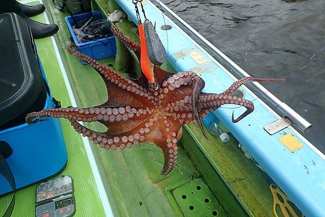タコ釣りが楽しかったので、ゆるゆる釣り部を再開しました。読んでね。 東京湾のタコエギ(蛸餌木)釣り入門@黒川本家 玉置標本 @hyouhon note(ノート)