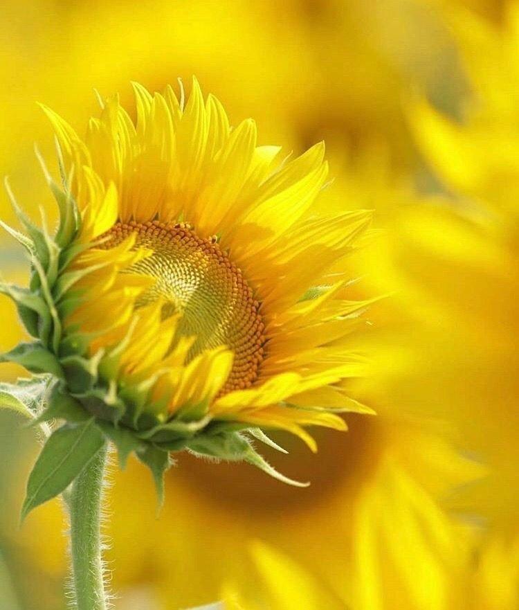 Good Morning Everyone Happy Sunday <br>http://pic.twitter.com/Ru66ERRIvN