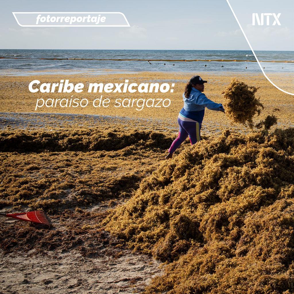 🔸#FOTORREPORTAJE   «Caribe mexicano: paraíso de sargazo».➡http://ow.ly/CwEb50v6IdF• #Notimex