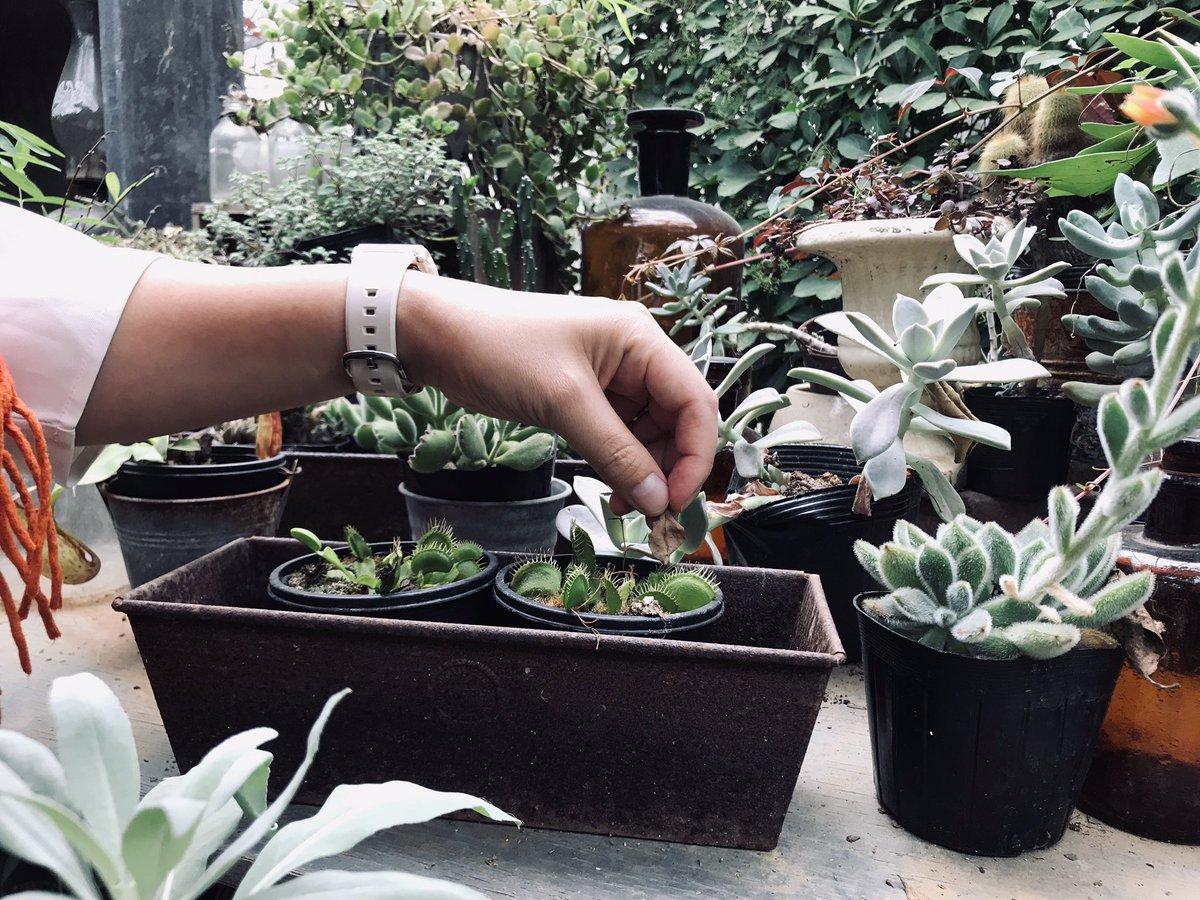 撮影前に食虫植物で遊ぶ… #映像制作 #omegane