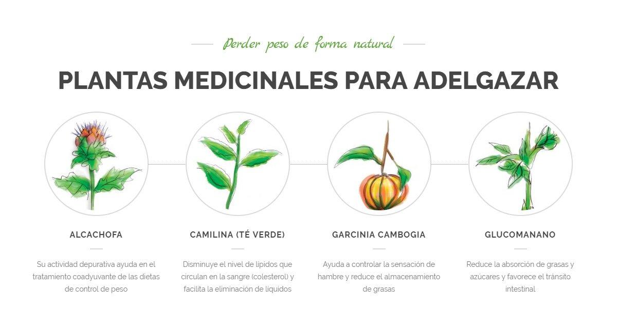 planta alcachofa para bajar de peso