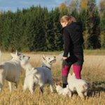 """Image for the Tweet beginning: Kevytyrittäjämme Maikki kouluttaa eläimiä: """"Minulla"""