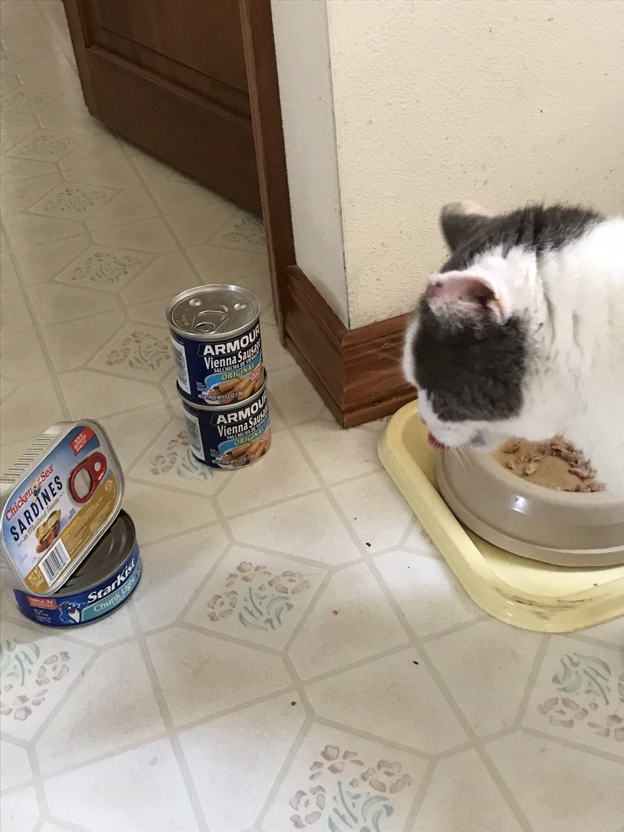 ❤️Tuna Tuesday Midwest report: I've broken into the pantry and am sampling everything I can get my paws on! Another hot day in the 90s, slight breeze, but humid. Lot of inside napping time! @LordGraydon @JoyOfCats @PincyCat @sandyincanada @6327carole @Aishatonu @Kathlee54272830