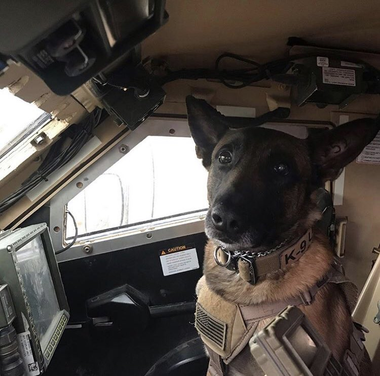 MilitaryWorkingDogs on Twitter