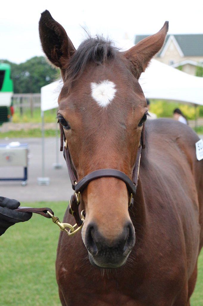 ラフィエスタの19(父ドレフォン)。ウインドインハーヘアの牝系出身。近親にクイーンC(GⅢ)優勝馬のアドマイヤミヤビ。  #セレクトセール2019
