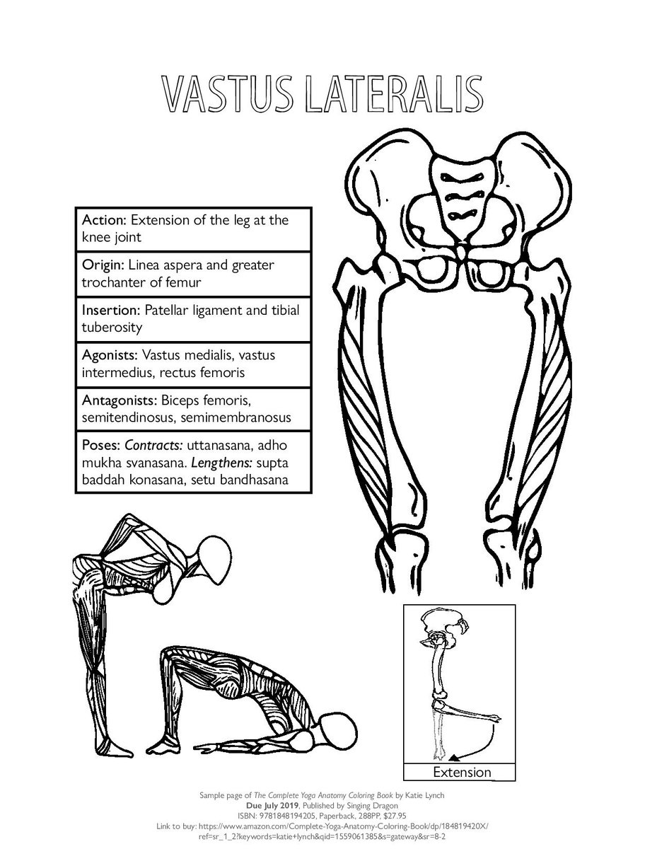 Singing Dragon Books On Twitter We Re So Excited For The Publication Of The Complete Yoga Anatomy Coloring Book By Katie Lynch That We Re Sharing Some Fun Teasers From The Book Leading Up