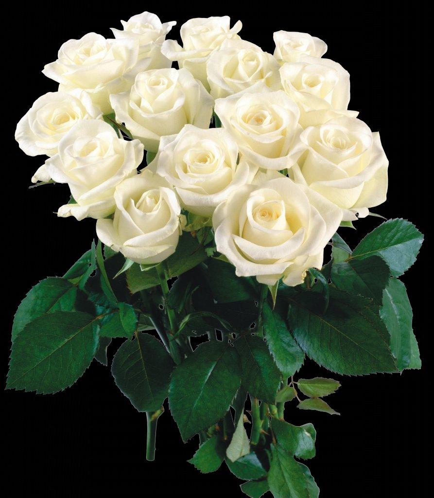 Состарить, букет белых роз гифы