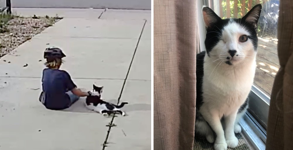 Family discovers their one-eyed cat has a little admirer from the neighborhood who visits him every day. See full story and video: lovemeow.com/boy-visits-one…