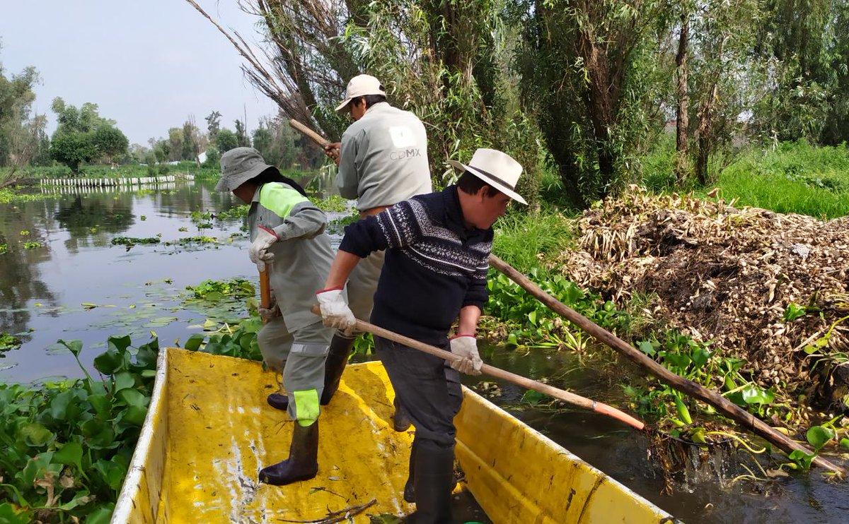 Alcaldía Xochimilco в Твиттере: «#SabíasQue Toda la maleza acuática que  retiramos se usa como abono orgánico para nuestras chinampas. Hoy  realizamos la limpieza de lirio acuático del Canal Apampilco.…  https://t.co/aw6qDJhzzZ»