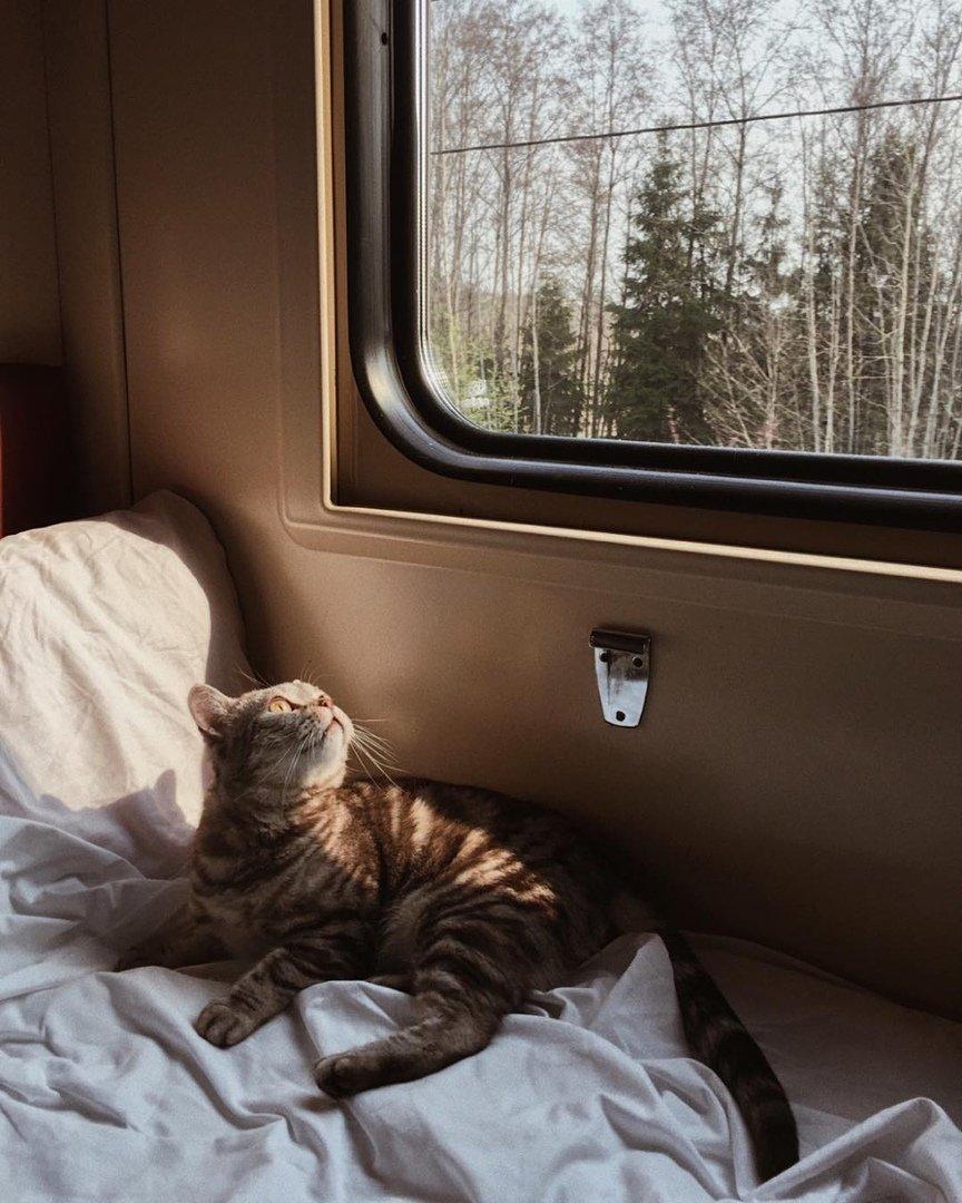 Поезд кот прикольная картинка