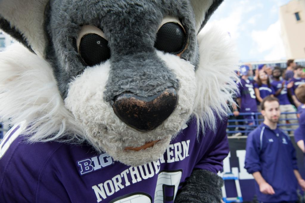 Were not kiddin, @WillieWildcatNU is one lovable kitten. Happy #NationalKittenDay to this cool cat!