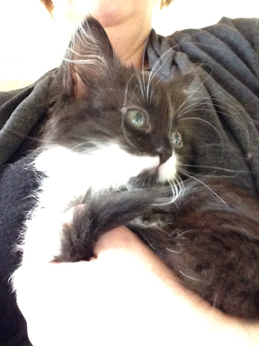 How did I not know that it is  #NationalKittenDay. So here is a picture of me 4 years ago 😹😹. Mum says we might be getting a new kitten but I bet it doesn't look at cute as I did 😹😹😹😹💕🐾💕💕#CatsofTwitter