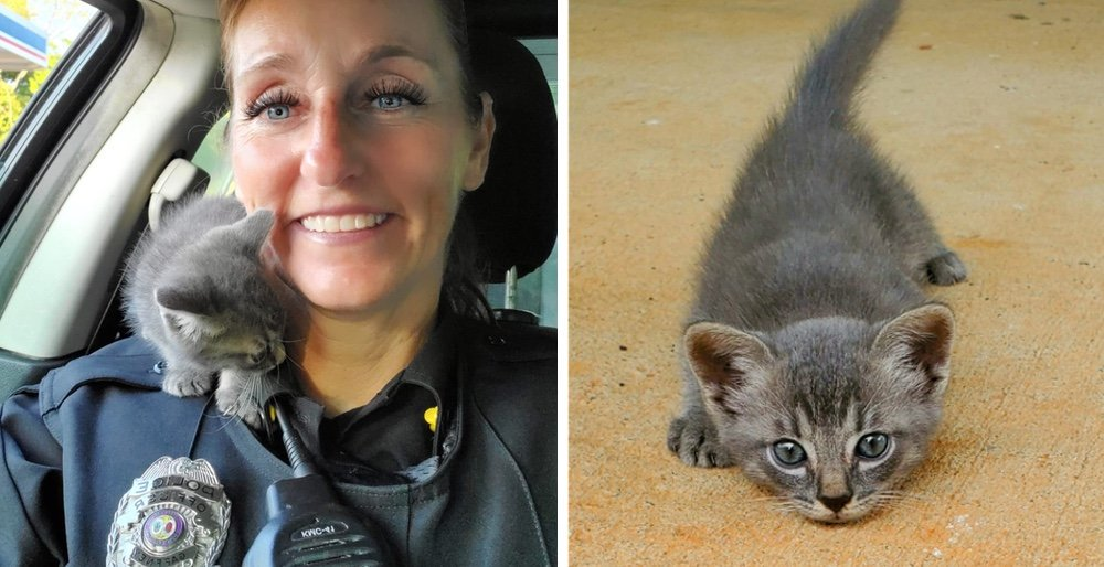 Stray kitten runs across the road, crawls up onto an officers shoulder and wont let go. See full story and updates: lovemeow.com/kitten-stray-o…