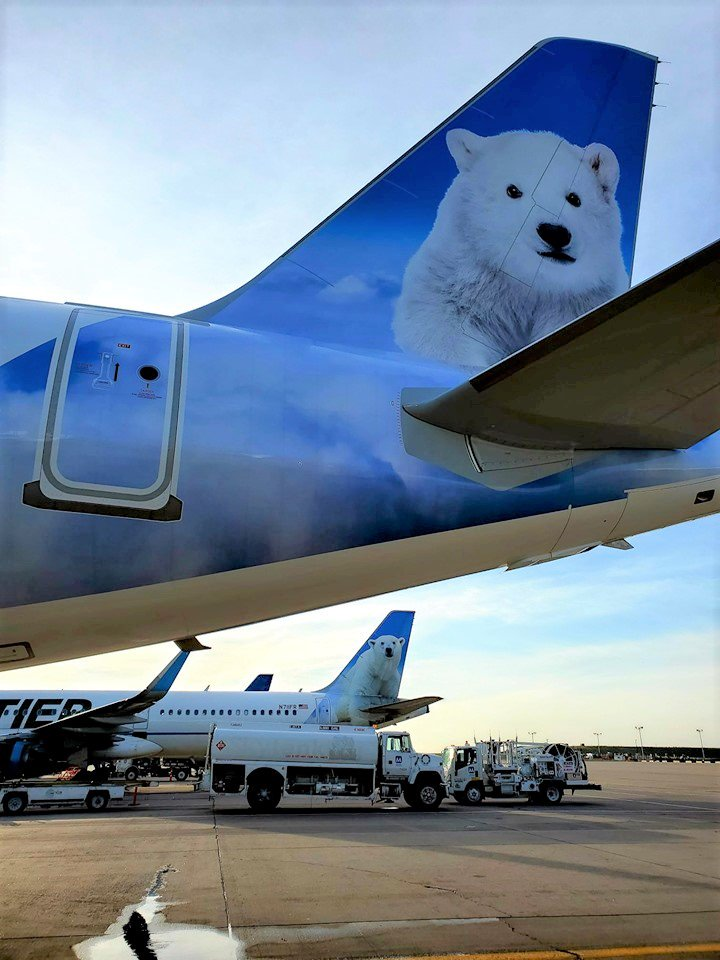 frontier airlines on twitter powder the polar bear hanging out with frontier s newest cub blanco joey maez powder the polar bear hanging out with
