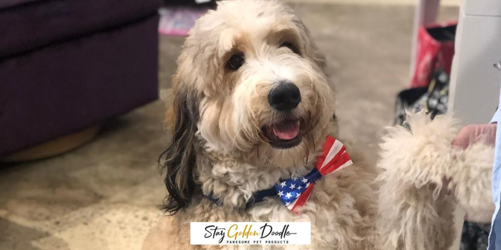 StayDoodle - Stay Golden Doodle Twitter Profile   Twitock