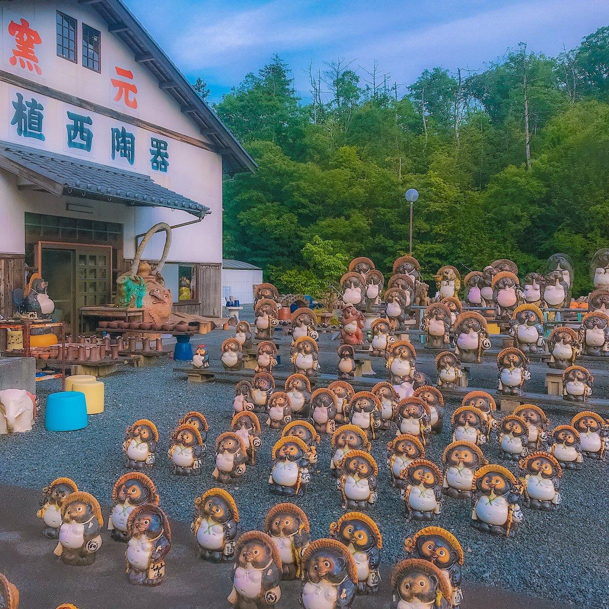 滋賀県信楽町で出会った信楽焼のタヌキ達=꒱‧*  可愛いタヌキから怖い顔のタヌキまで勢揃いで、店内にも素敵な工芸品がズラリと並んでいました クーちゃんもタヌキと一緒に  #犬とお出かけ pic.twitter.com/DrpwLadLFh