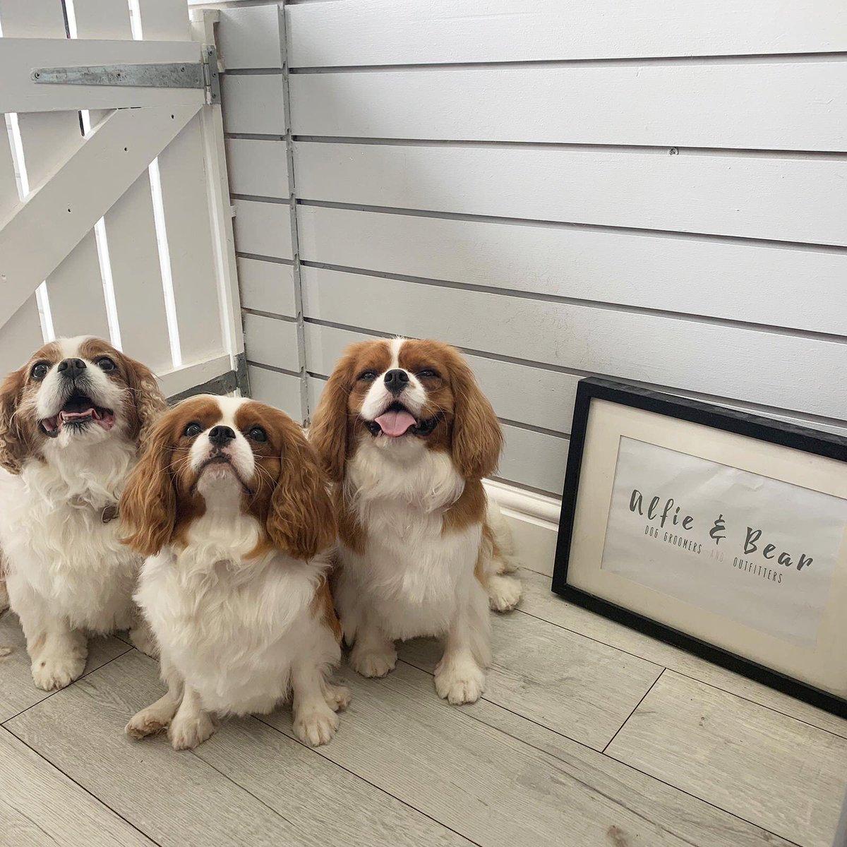 RT @AlfAndBear:  Gorgeous Little Cav Family  Dennis, Peggy & Penelope  #DogGroomer #DogGrooming #DogOfTheDay #CavalierKingCharlesSpaniel #Dogs #Puppy #DogSpa #DogGroomingSalon #DogsOfTwitter #DogLovers #NEFollowers #NewcastleUponTyne<br>http://pic.twitter.com/3ijXSyW34c