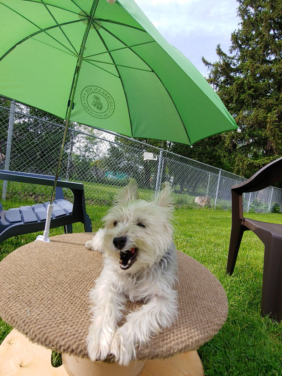 @NewsChannel9 #AllAmericanPetPhotoDay  Ellie May loves her Pampered Pooch Poop Deck!  It Keeps the Sun out of her eyes!  Buddy just loves his Tennie balls.