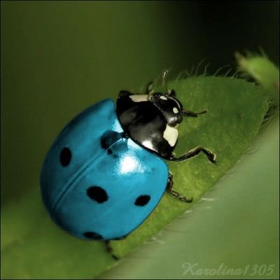 The house shook as the door slammed & dreams shattered. Angry thoughts became unspeakable rage. Faces red, spittle flying, clenched fists of #fury. Arguments regurgitated, accusations slammed, tears gushing. The truth was simple. I was a blue ladybug; he needed a red one. #vss365
