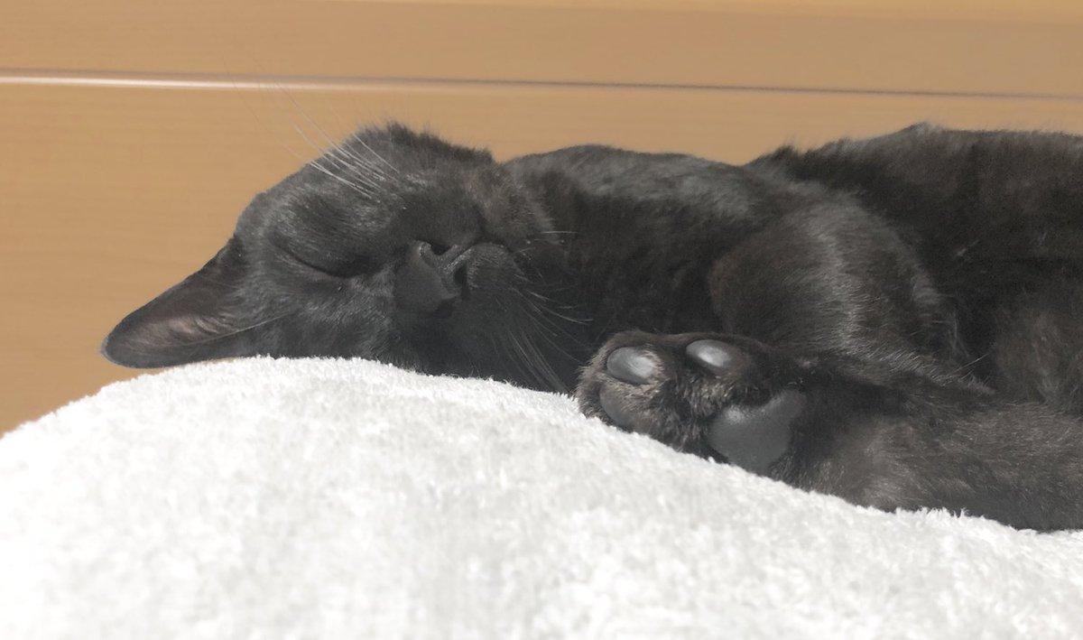 なぜいつも片耳だけ下敷きにして寝る…?