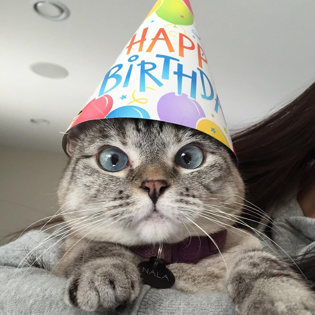 Смешные картинки днем рождения кошка