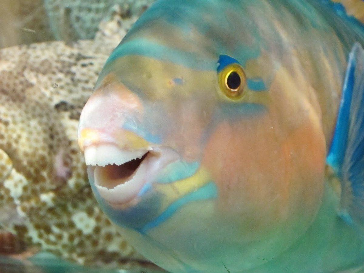 картинки рыб которые смеются меня пляже мужу
