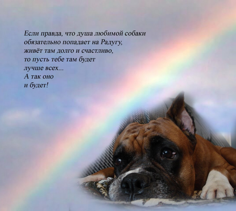 Картинки скорби по собаке
