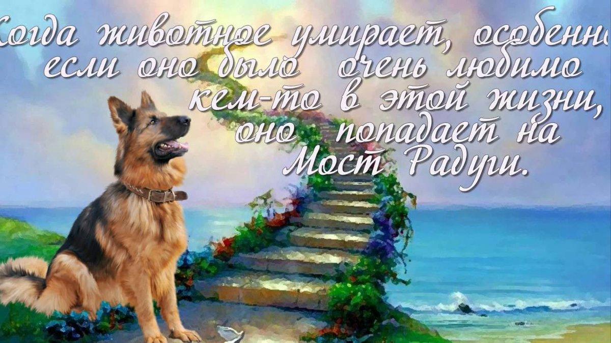 Мастеров, открытки скорби по собаке