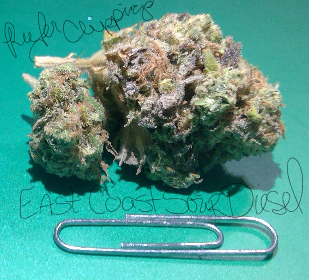 #SignsThatYouLiveInThePast you still measure your #weed by finger folds and call it a lid, a nickle a dime or a quarter bag.<br>http://pic.twitter.com/wqQPVpa1xG