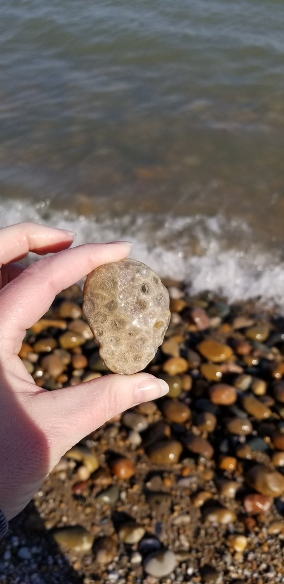 Listen, Listen, Listen... You have to go to Lakeport State park! It is full every summer, so book six months in advance.. but I find the most Petoskey Stones in Lakeport... wait.. should I tell my secret?!?! #PureMichiganChat