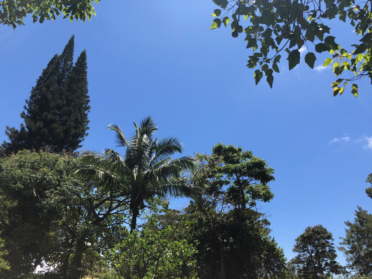 test Twitter Media - Hot with blue skies in Haiku. #cmweather #Maui #Mauinokaoi https://t.co/aU5S3BBY4p