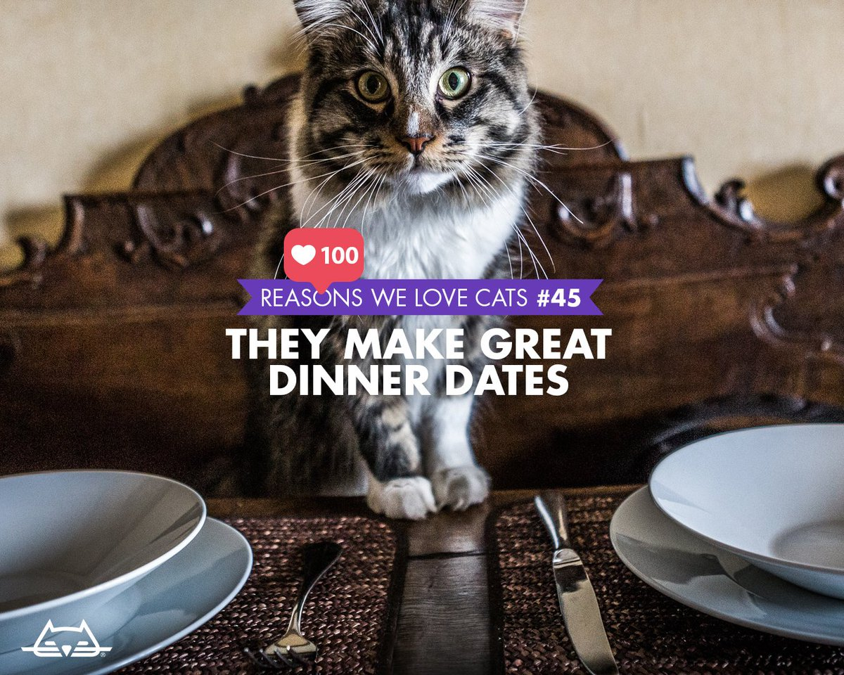 Reason #45 we love cats: theyre always down for a romantic dinner. Check out the other 99 at: bit.ly/2XEpWqN