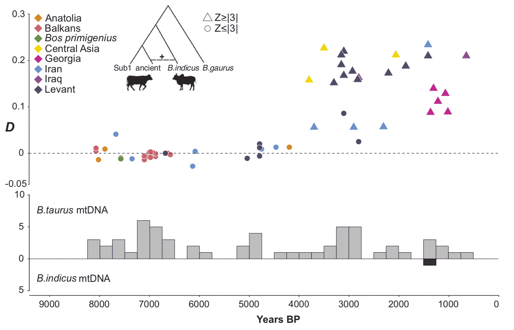 Illustration of the proportion of Zebu ancestry over time in domesticated cattle of Eurasia. From Verdugo et al. 2019