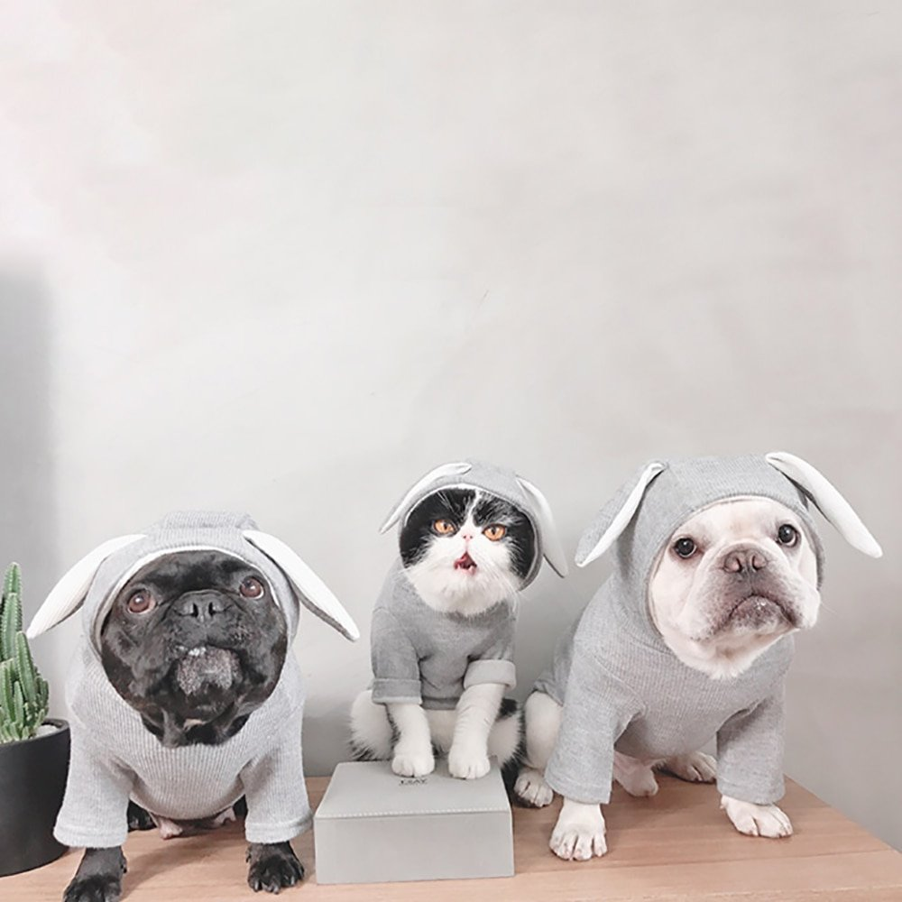 #petsupplies Adorable Rabbit Costume for Cats and Dogs <br>http://pic.twitter.com/NDAzm5qkUs