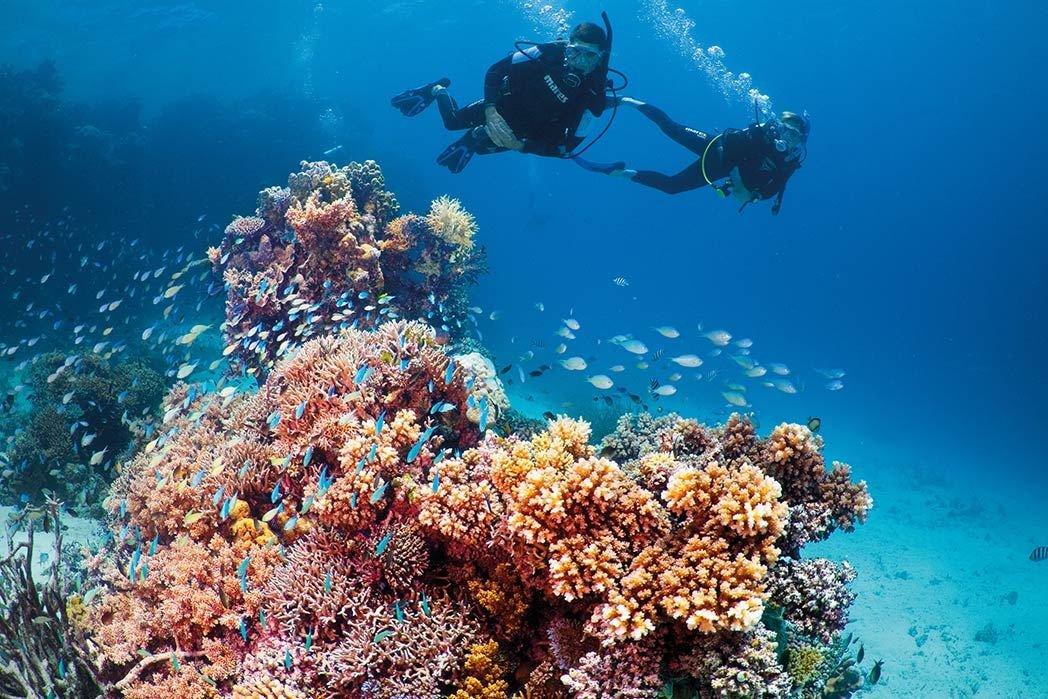 Подводные фото южно китайского моря