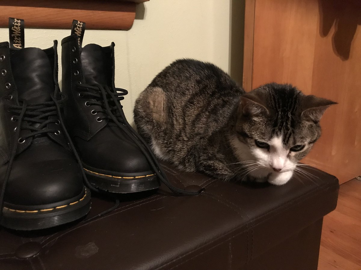 In today's Daily Boo, my efforts to become a shoe have been for naught. #CatsOfTwitter #TinyTiger #FridayMorning <br>http://pic.twitter.com/wjobrph7Be