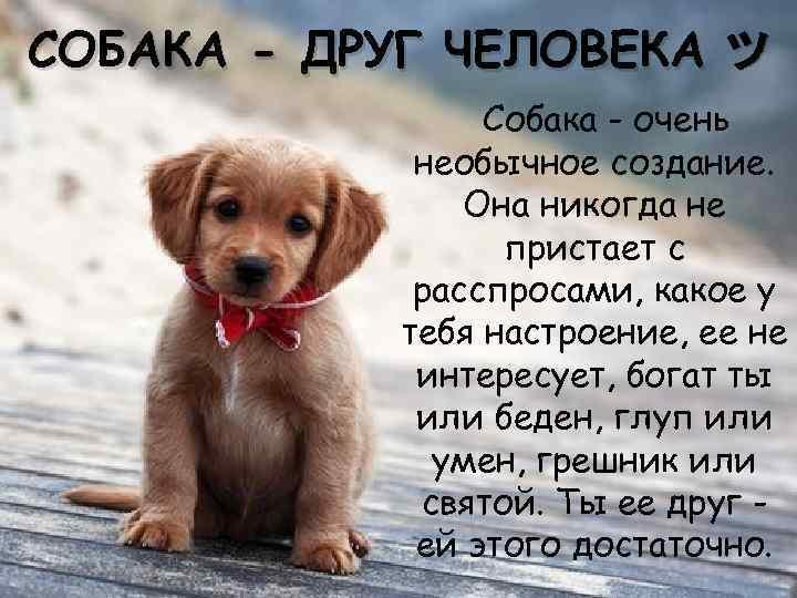 стихи о собачке в картинках приблизить кожу, увидите