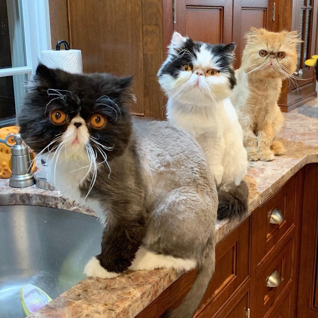 Three crazy amigos. #WeeklyFluff https://www.instagram.com/p/Bz04Q7qglxO/