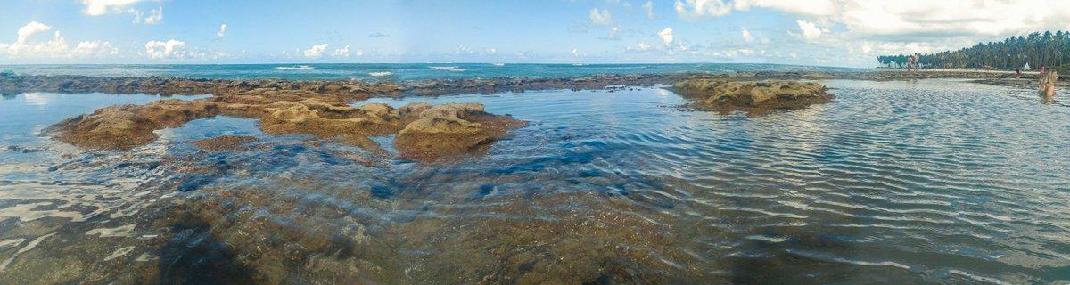 #Paisagem #fantástica do #litoral do #Pernambuco nesse #fbf. #Lindas #PiscinasNaturais da #PraiaDosCarneiros. #BoraBoraCarneiros #FlashBackFriday #amazing #panoramic #beach #view #PernambucoEmFoco #NordesteMeuLindo #NordesteEmFotos #beachlovers #gratidão #viajarfazbempic.twitter.com/4vinpvGHPK