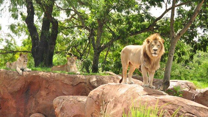 Go Lions Photo